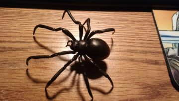 black_widow_spider_1