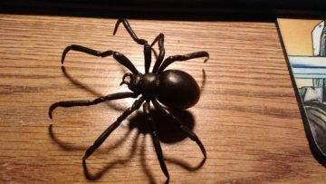 black_widow_spider_2