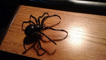black_widow_spider_3