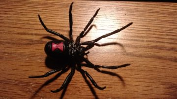 black_widow_spider_4