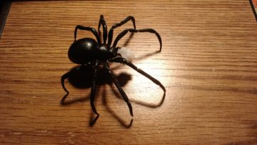 black_widow_spider_5