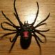 black_widow_spider_8